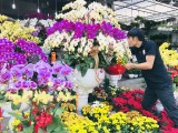 Rộn ràng Chợ hoa xuân Canh Tý 2020