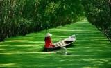 越南九龙江三角洲地区各省努力开发旅游资源 推动旅游业发展