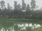 Hai người đàn ông đuối nước trong hồ công viên Thành phố mới Bình Dương