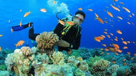 越南芽庄跻身世界最佳潜水胜地