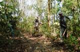 Phú Giáo: Tích cực phòng chống cháy rừng