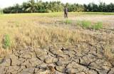 气候变化:九龙江三角洲地区继续进入海水入侵阶段