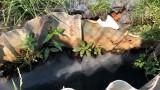 Nhà xưởng hoạt động gây ô nhiễm môi trường sống của người dân?