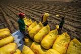 Điều tiết linh hoạt để đảm bảo an ninh lương thực quốc gia
