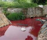 TP. Dĩ An: Nước suối Cây Sao màu đỏ tươi, người dân lo lắng