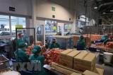 Doanh nghiệp Việt tại Liên bang Nga vượt qua cơn bão COVID-19
