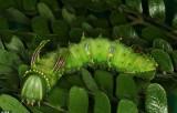 Thực vật có khả năng ngụy trang mùi hương để sinh tồn