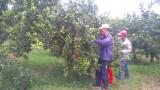Nông nghiệp ứng dụng công nghệ cao: Hướng đi tất yếu
