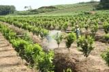 Nông nghiệp phát triển, nông thôn đổi mới