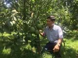 Làm giàu từ vườn chuyên canh