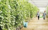 Nông thôn mới và sức bật từ nông nghiệp công nghệ cao