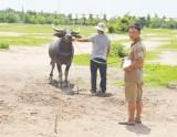Phá chuyên án trộm trâu, bò bằng xe tải