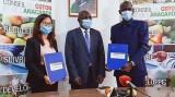 越南企业向科特迪瓦订购15万吨腰果 创该国腰果出口新纪录