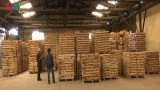 Wood exports witness rebound over seven months