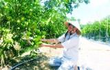 农业及农村的可持续发展