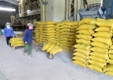 EVFTA:越南大米出口企业主动寻找欧盟伙伴
