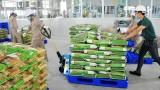 越南香米进军欧盟市场前景广阔