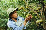 Huyện Dầu Tiếng:Tập trung nâng cao chất lượng nông sản