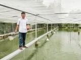 Làm giàu bền vững từ cá cảnh
