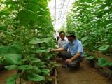 Văn phòng điều phối Nông thôn mới Trung ương: Khảo sát thực tế xây dựng Nông thôn mới ở huyện Phú Giáo