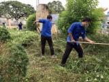Thị đoàn Bến Cát: Ra quân hưởng ứng Ngày trồng cây đồng loạt