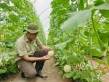 Nông nghiệp hướng tới công nghệ cao – Kỳ 1