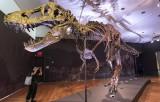 Bộ xương khủng long T-Rex hoàn chỉnh nhất thế giới có giá cao kỷ lục