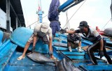 ASEAN Today: Vietnam lauded for efforts to combat illegal fishing
