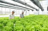 实现农业结构重组以发展