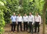 Hội nông dân tỉnh: Kiểm tra hoạt động công tác hội và phong trào nông dân tại huyện Phú Giáo