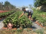 Tổ hợp tác trồng hoa phát huy hiệu quả