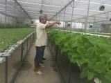 生产经营优秀农民运动带来的结果