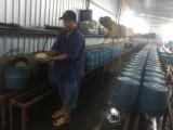 Chi hội sản xuất giá phường Vĩnh Phú, TP.Thuận An: Hoạt động hiệu quả
