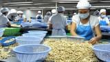 越南是世界腰果加工和出口第一大国