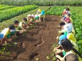 Trung tâm Hỗ trợ thanh niên công nhân và lao động trẻ: Tổ chức chương trình trải nghiệm cho con em công nhân