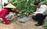Hội Nông dân huyện Phú Giáo: Hỗ trợ hội viên sản xuất hiệu quả