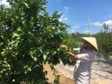 Đổi mới tư duy, cách làm trong sản xuất nông nghiệp