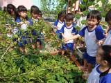 Trường Mầm non Hoa Sen: Đa dạng các hình thức giáo dục trẻ