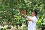 Hội Nông dân tỉnh: Đổi mới, nâng cao chất lượng phong trào nông dân