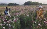 Sắc xuân trên cánh đồng hoa nhân ái