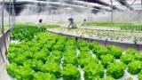越南农业起飞的机会