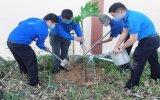 """Tỉnh đoàn Bình Dương: Phát động Tết trồng cây """"Đời đời nhớ ơn Bác"""""""