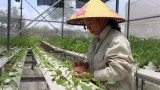 为2021年首都农业实现增长4%以上打造突破口
