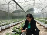 Chú trọng nông nghiệp đô thị, nông nghiệp ứng dụng kỹ thuật cao
