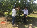 Huyện Bắc Tân Uyên: Kinh tế tập thể phát triển đúng hướng, hiệu quả