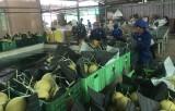 Phát huy lợi thế, xây dựng sản phẩm nông nghiệp tiềm năng - Kỳ 1