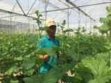 Quỹ hỗ trợ nông dân phát huy hiệu quả
