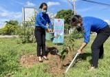 Khánh thành sân chơi thiếu nhi và phát động trồng cây