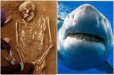 Phát hiện người đầu tiên bị cá mập cắn chết cách đây 3000 năm