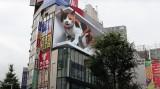 Chú mèo 3D khổng lồ